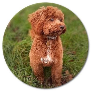 Pippa Dog Grooming Testimonial